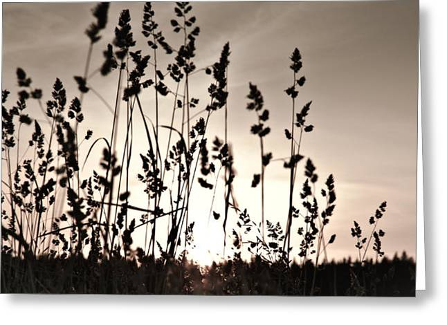 The Grass At Sunset Greeting Card