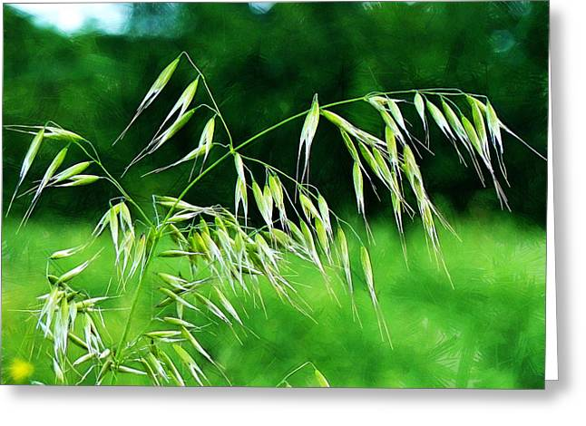 Greeting Card featuring the photograph The Grass Seeds by Steve Taylor