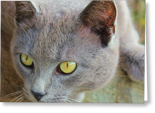 The Gray Cat Greeting Card by Laurinda Bowling