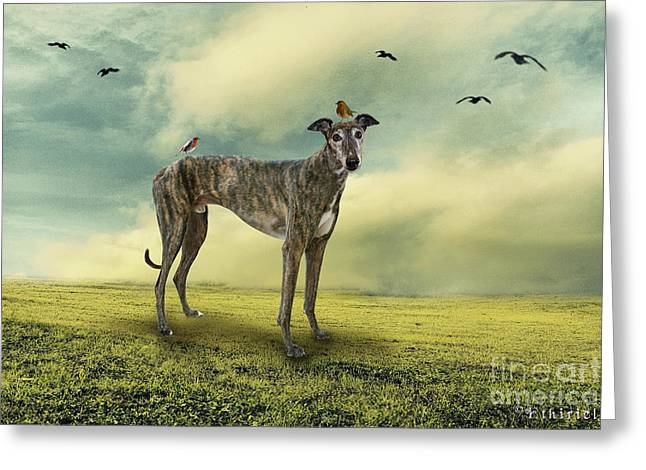 The Greyhound Greeting Card by Ethiriel  Photography