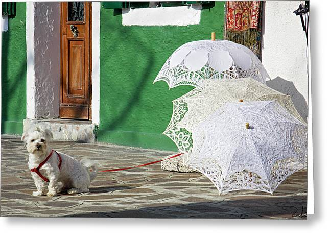 Greeting Card featuring the photograph The Guardian Of The Umbrellas. by Raffaella Lunelli