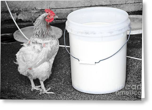 The Hen And The Milk Bucket Greeting Card
