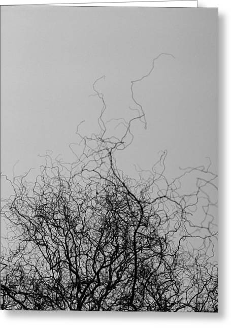 Greeting Card featuring the photograph The Idea Tree by Luis Esteves