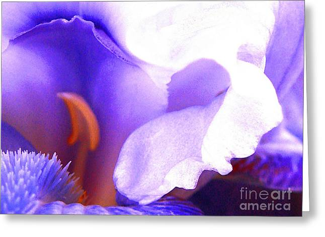 The Intimate Iris Greeting Card by Jerome Stumphauzer