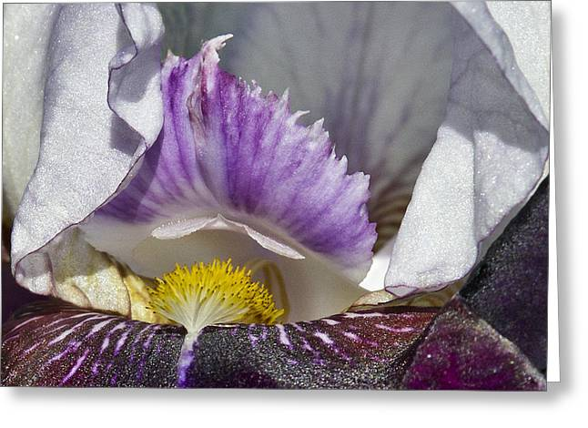 Greeting Card featuring the photograph The Iris by David Lester