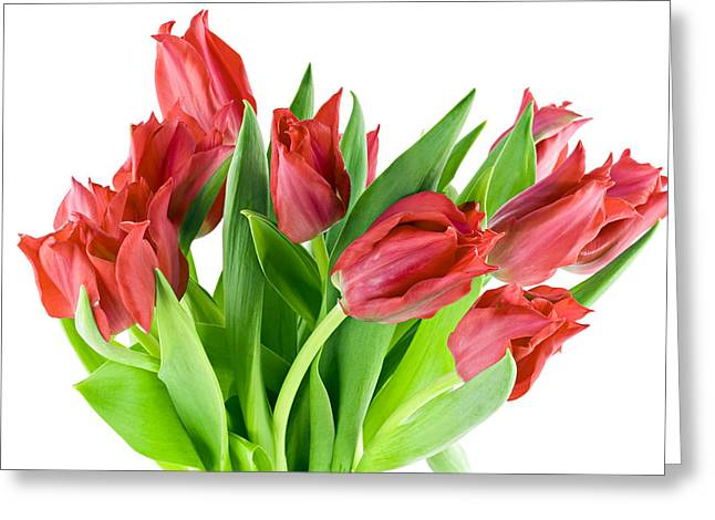 Greeting Card featuring the photograph The Isolated First Spring Tulips Background by Aleksandr Volkov