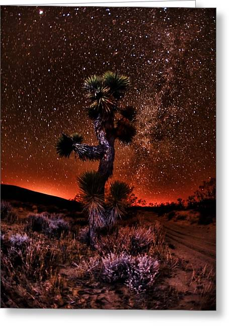 The Joshua Tree At Night Greeting Card by Shane Lund