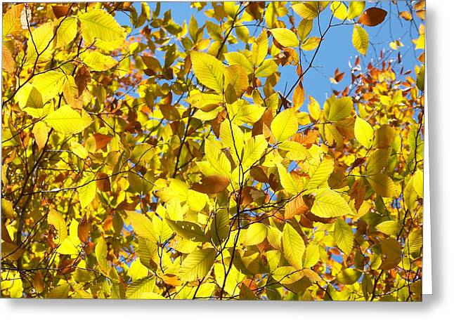 The Joy Of Autumn Greeting Card