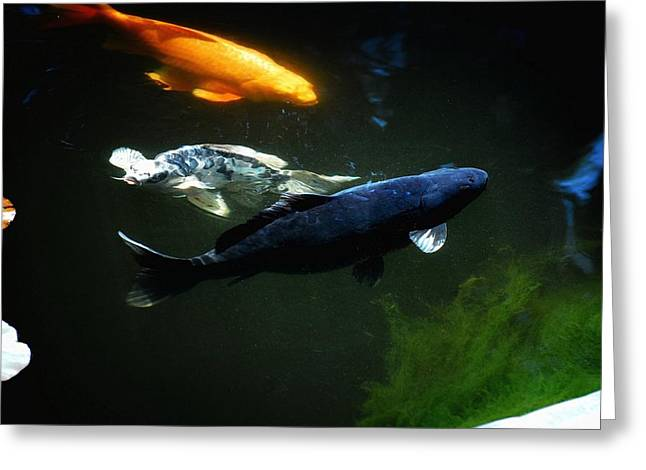 The Koi Jungle Greeting Card by Don Mann