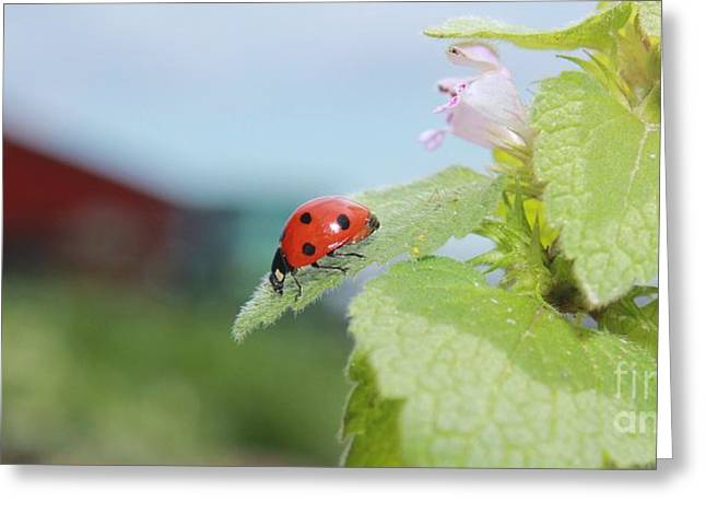 The Lady Bug  No.2 Greeting Card by Laurinda Bowling