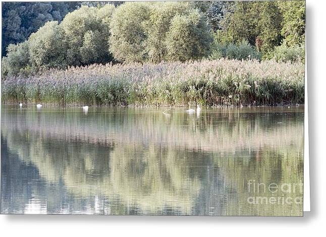 The Lake Reflection Greeting Card by Odon Czintos