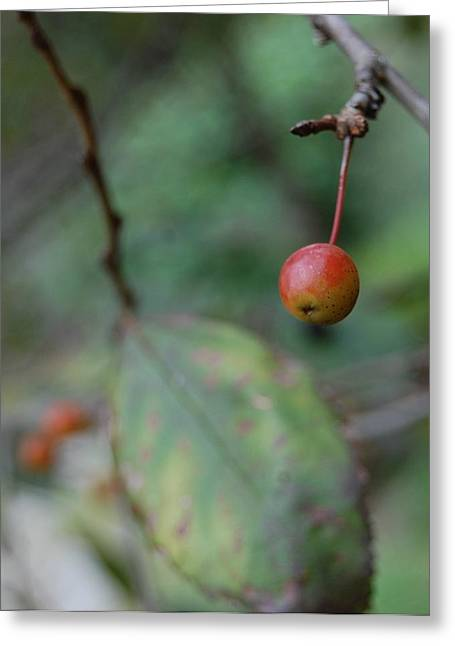 The Last Berry Greeting Card by Beverly Hammond