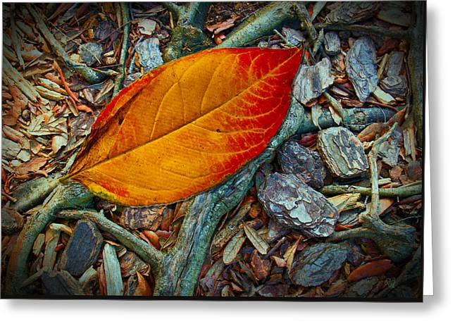 The Last Leaf Greeting Card by Barbara Middleton