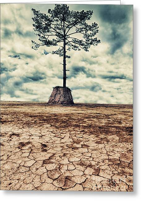 The Last Tree Greeting Card by MotHaiBaPhoto Prints