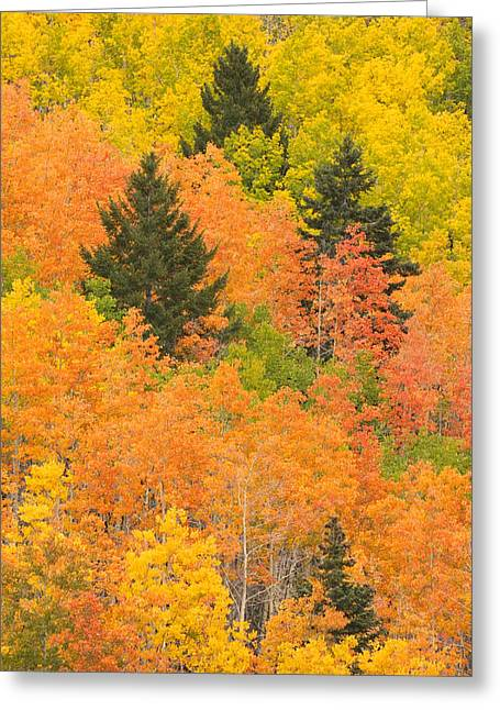 The Leaves Of A Forest Change Colors Greeting Card by Ralph Lee Hopkins