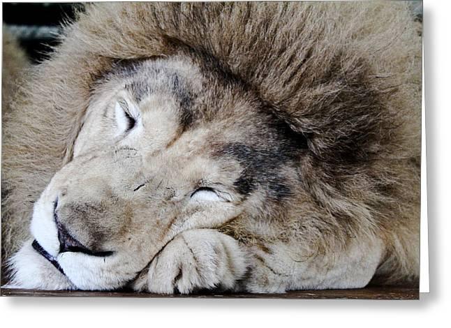 The Lion Sleeps Greeting Card by Elizabeth Hart