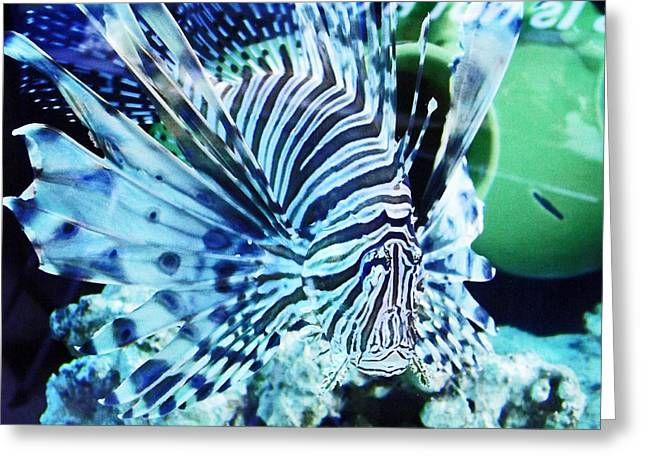The Lionfish 1 Greeting Card by Robin Hewitt