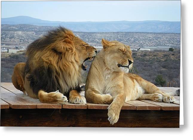 The Lions Greeting Card by Olga Vlasenko
