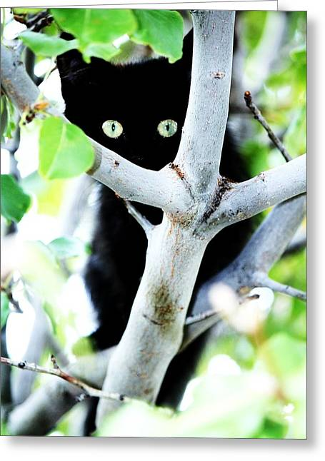 Greeting Card featuring the photograph The Little Huntress by Jessica Shelton