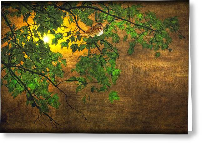 The Little Sparrow In The Tree Greeting Card by Tom York Images
