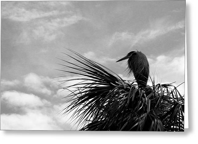 The Lonely Great Blue Heron Greeting Card