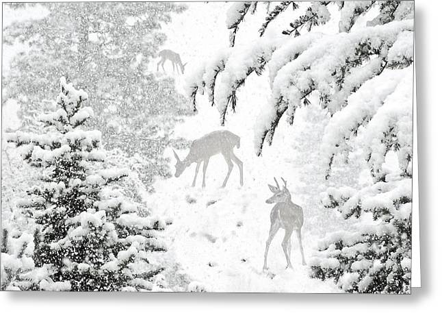 The Lookout Greeting Card by Diane Schuster