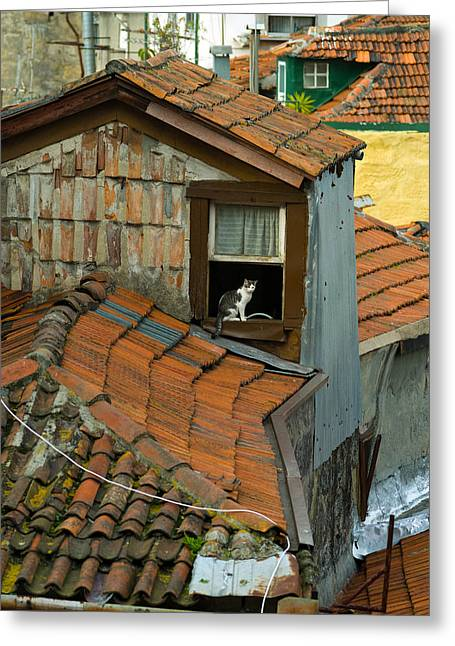 The Lord Of The Roofs Greeting Card by Dias Dos Reis