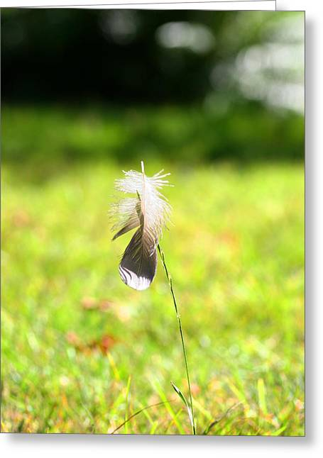 Greeting Card featuring the photograph The Lost Feather by JM Photography