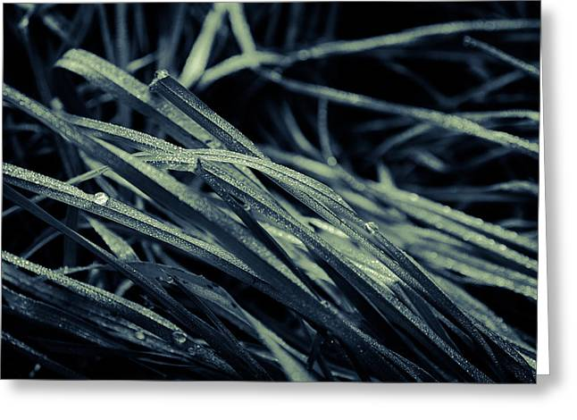 The Lying Grass Greeting Card by Andreas Levi