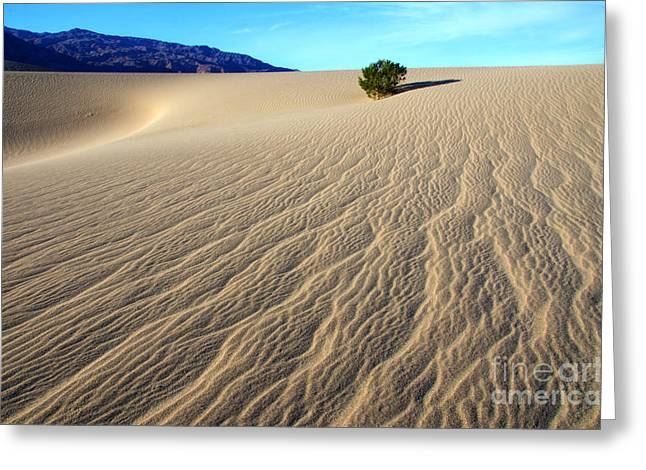 The Magic Of Sand Greeting Card by Bob Christopher