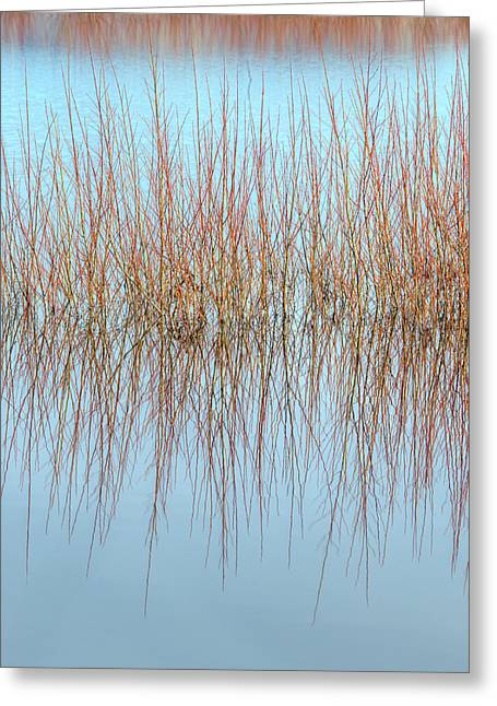 The Marsh Mirror Greeting Card by Loree Johnson