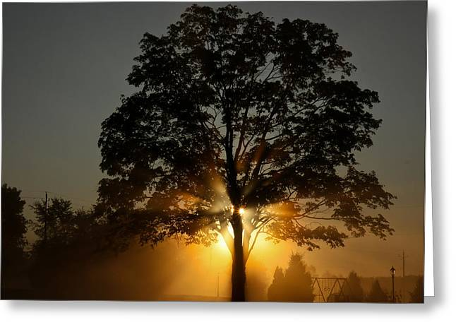 Greeting Card featuring the photograph The Morning Fire by Nick Mares
