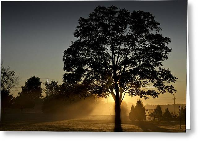 Greeting Card featuring the photograph The Morning Light by Nick Mares