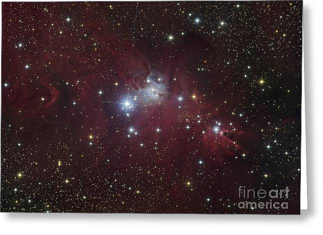 The Ngc 2264 Region Showing The Cone Greeting Card by Filipe Alves