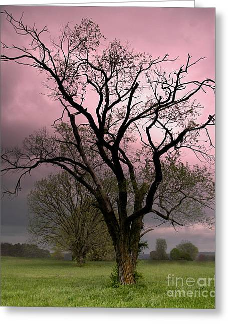 The Old Tree Greeting Card by Brian Stamm