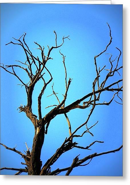 The Old Tree Greeting Card by Mara Barova