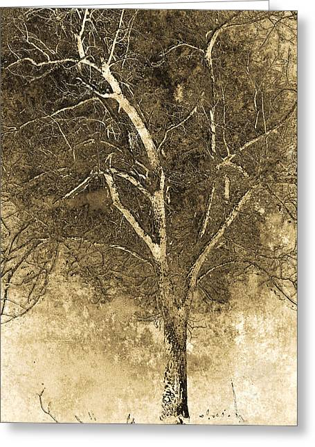 The Orchard Way Greeting Card by Ron Jones