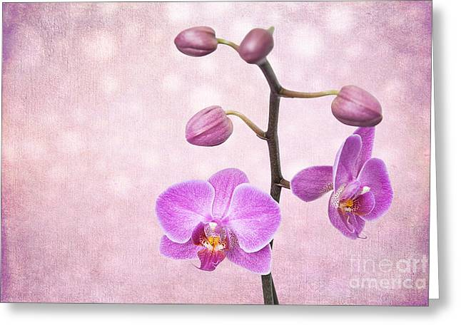 The Orchid Tree - Texture Greeting Card by Hannes Cmarits