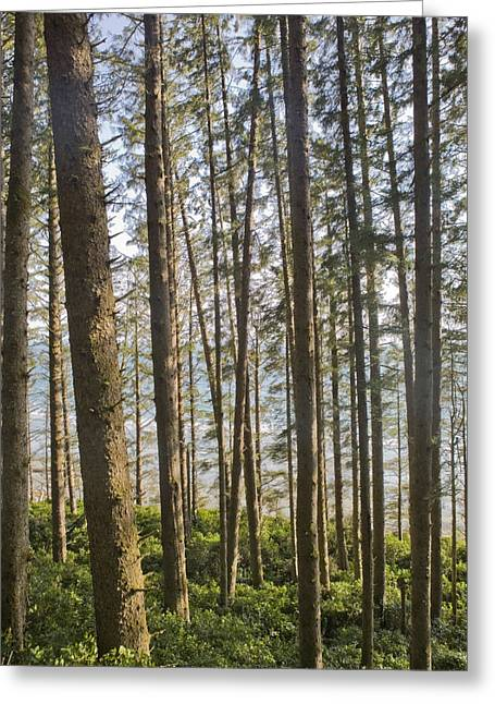 The Pacific Ocean Seen Through A Forest Greeting Card by Taylor S. Kennedy