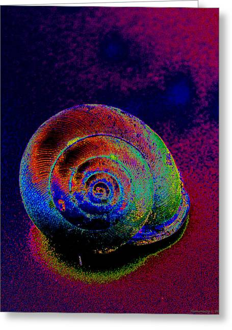 The Painted Shell Greeting Card