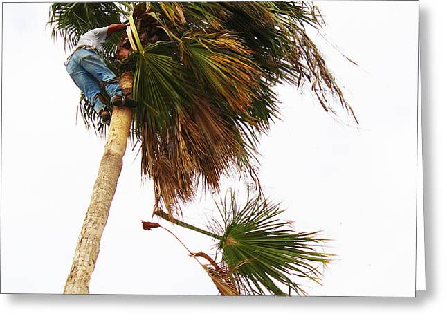 The Palm Tree Trimmer Greeting Card by Roena King