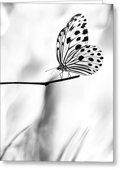 The Paper Kite Butterfly In Black And White Greeting Card