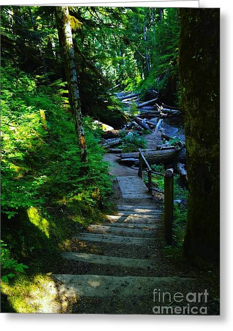 The Path To Iron Creek  Greeting Card by Jeff Swan