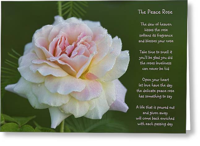 The Peace Rose Greeting Card
