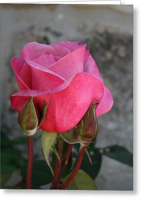 The Perfect Rose Greeting Card
