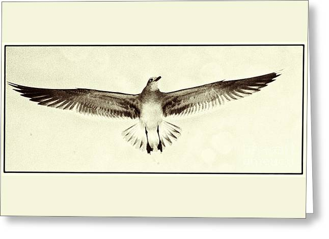 The Perfect Wing Greeting Card by Jim Moore