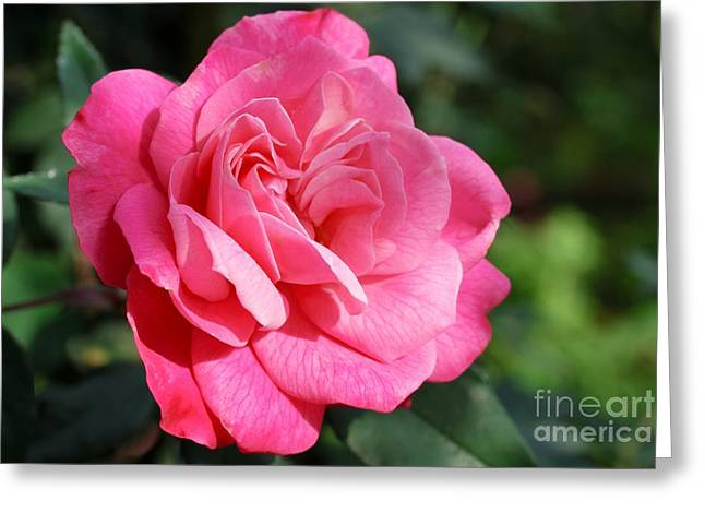 Greeting Card featuring the photograph The Pink Rose by Fotosas Photography