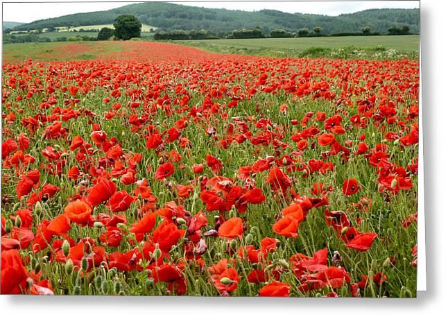 The Poppy Field Clonmel Greeting Card by Debra Collins