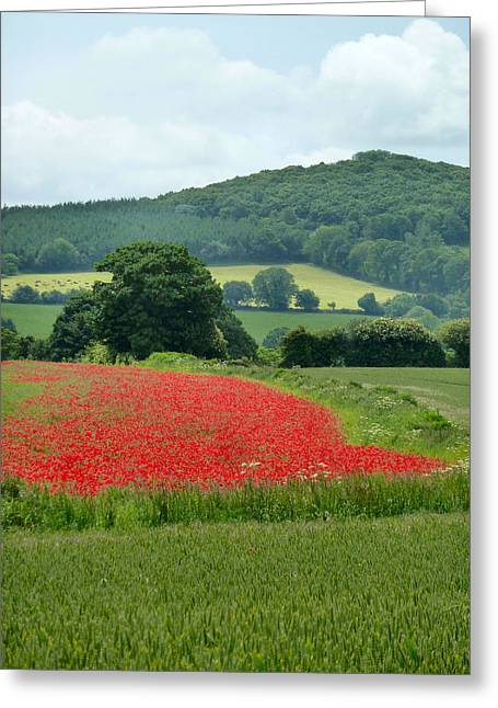 The Poppy Field. Greeting Card