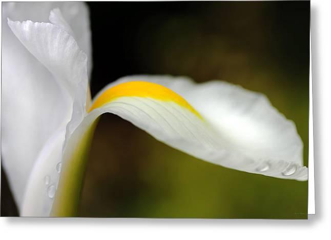 The Pose White Dutch Iris Flower  Greeting Card by Jennie Marie Schell